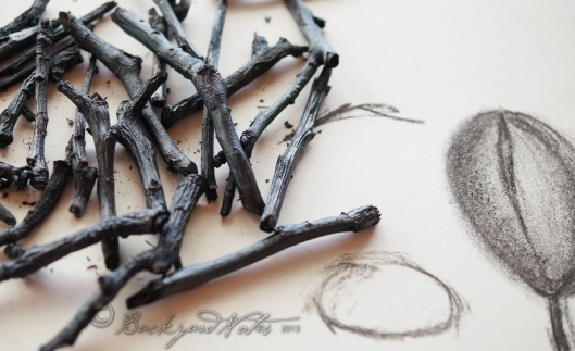 Apple & pear charcoal twigs