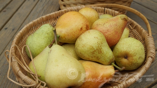 Bartlett and  Comice pears