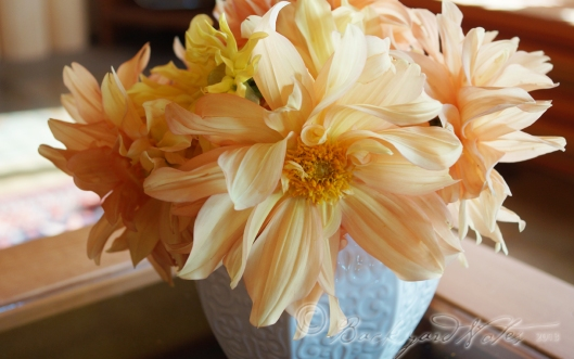 Mystery dahlia, but quite lovely