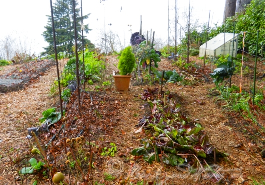 The vegetable garden at partial rest on the last day of 2013