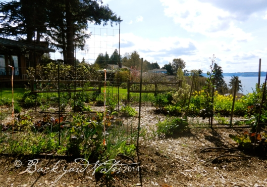A view through the vegetable garden