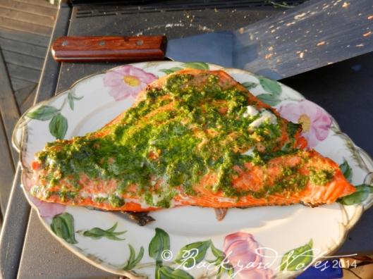 Sockeye salmon with radish top pesto