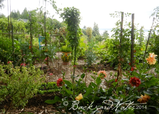 The view into the vegetable garden from the redwood seating.