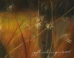 7_WinteredWildflowers